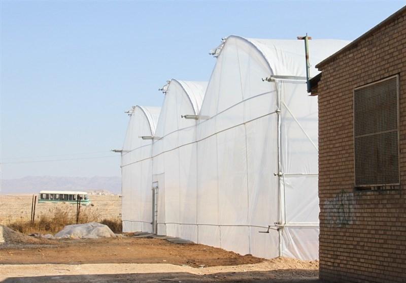 حمایت فائو از ایجاد معیشت های جایگزین برای پناهندگان افغانستانی ساکن در ایران